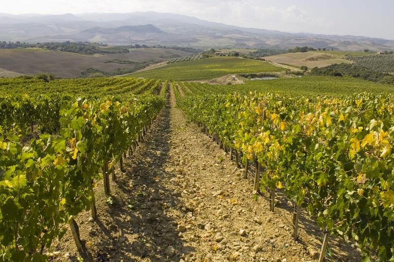 Casanova di Neri e Il Marroneto nell'olimpo dei vini