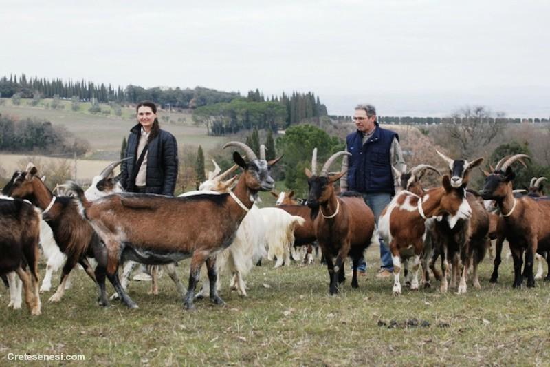 I caprini di Santa Margherita un capolavoro della natura