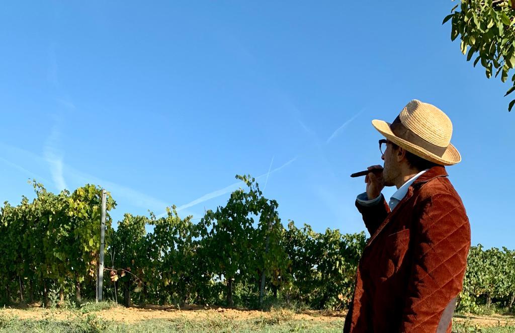Quali sono le caratteristiche del Bolgheri vino