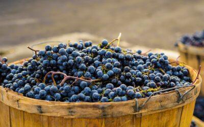 Il vino rosso: cosa contiene?