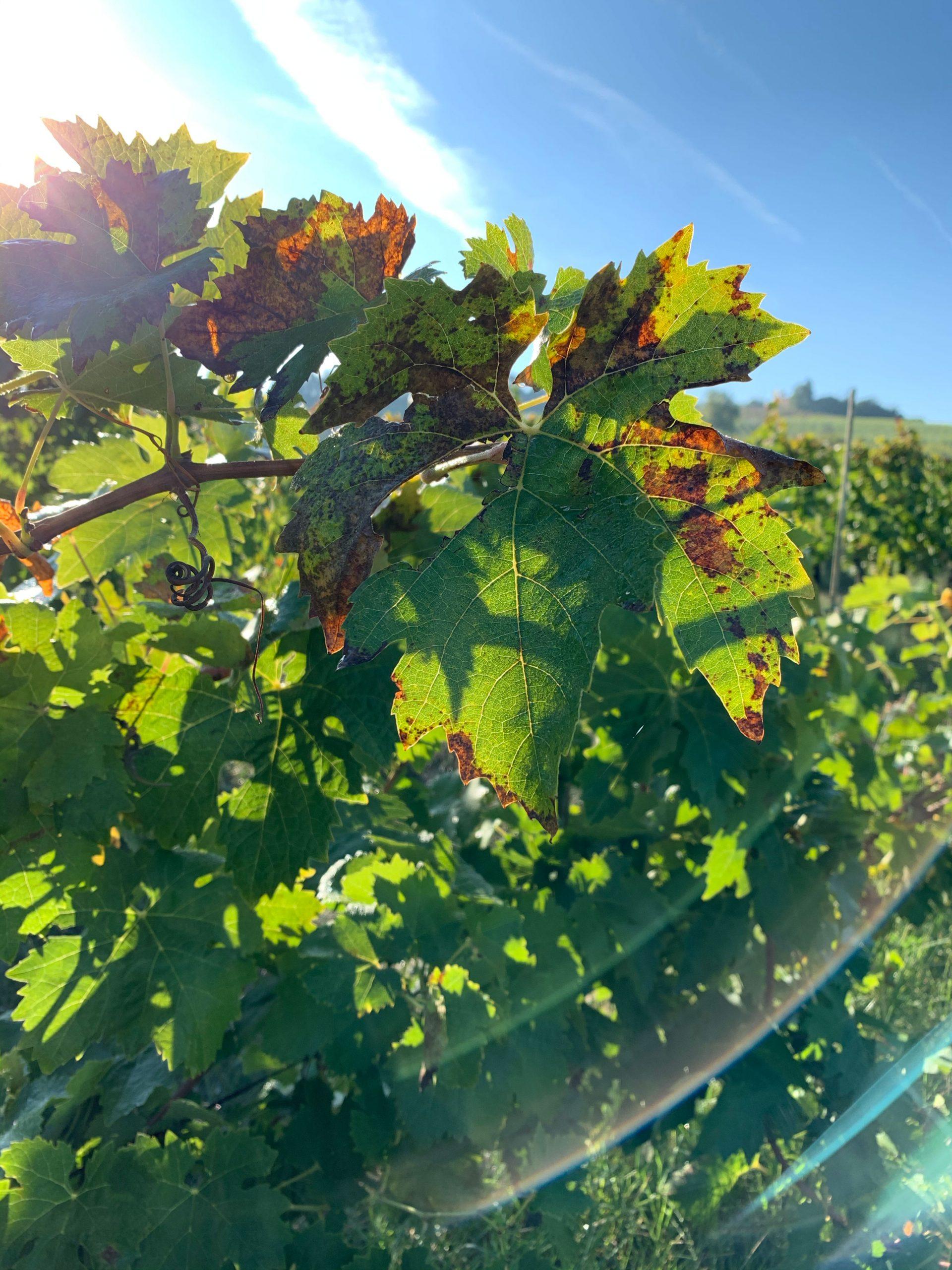 Miglior vino rosso: la mia classifica dei toscani